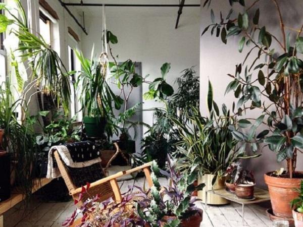 Plante i flori pentru interior magazin plante si flori for Plante de interior