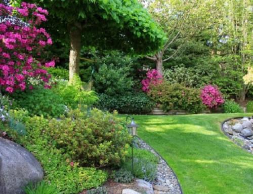 Sisteme de irigatii automate pentru gazon magazin plante for Arbusti ornamentali