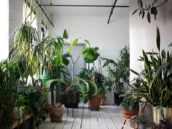7 Plante Ornamentale Prin Frunze Pentru Apartament Magazin