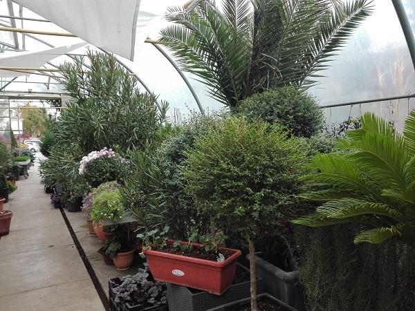 Găzduirea plantelor în seră