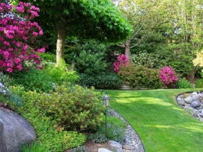 12 Arbuști ce decorează grădina tot anul din vară pâna în toamnă
