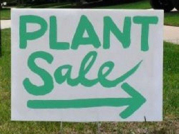 Plante online - Cum le alegem?