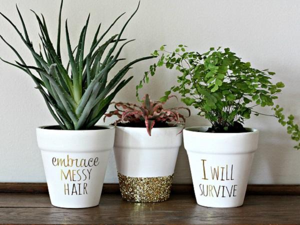 De ce se îmbolnăvesc plantele de interior?