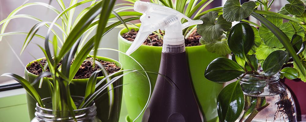 De ce se îmbolnăvesc plantele de interior? II