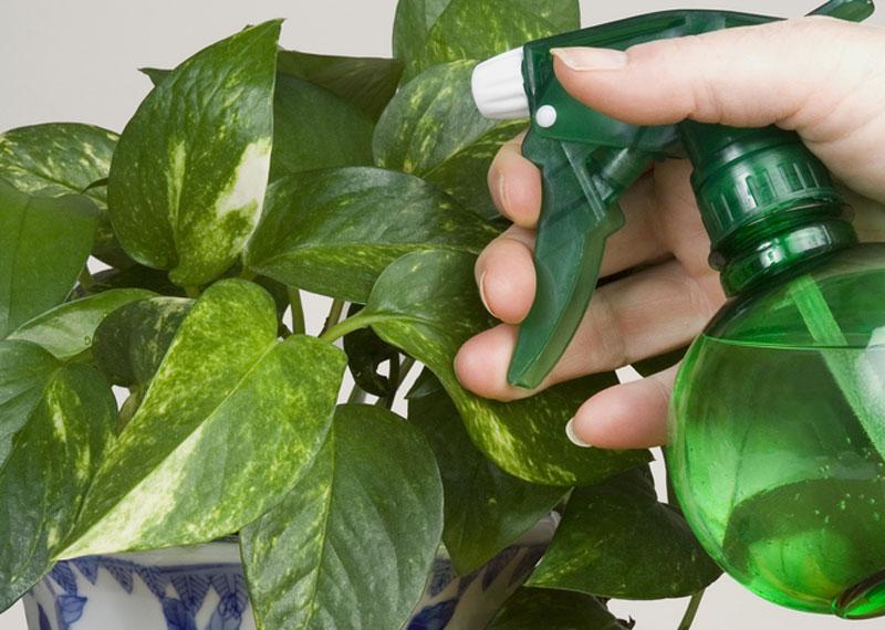 De ce se îmbolnăvesc plantele de interior? III